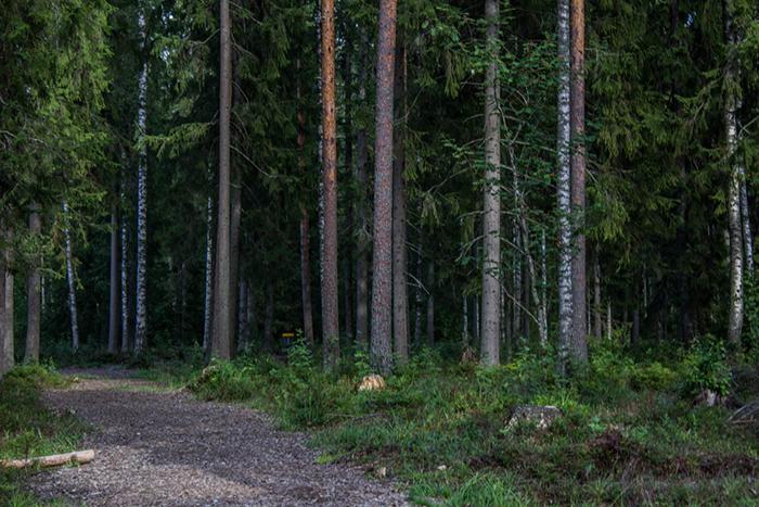 Mäntän fribarata (2 of 2)